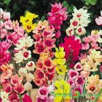 Тенелюбивые многолетние садовые