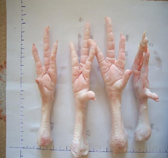 Куриная лапа из дерева своими руками 29