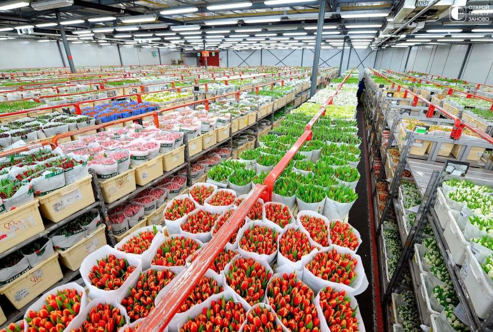 Выращивание дорогих растений как бизнес 42