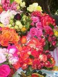 Саженцы роз чайно-гибридных